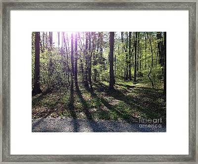 The Light In The East Framed Print by Janet Felts