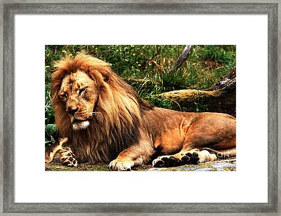 The Lion And The Mouse 2 Framed Print by Wingsdomain Art and Photography