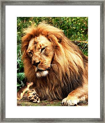 The Lion And The Mouse Framed Print by Wingsdomain Art and Photography