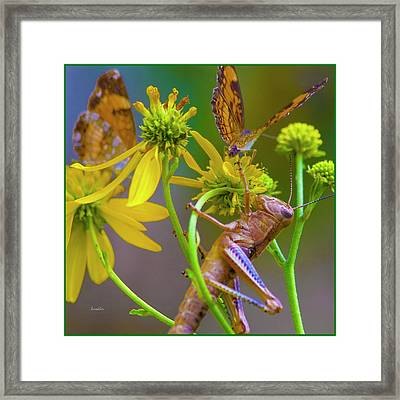 The Little Things Framed Print by Betsy C Knapp