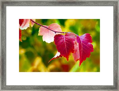 The Little Things That Bring So Much Joy Framed Print by James Steele