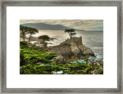 The Lone Cypress Carmel California Framed Print by Connie Cooper-Edwards