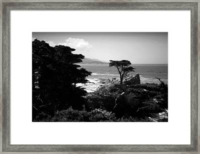 The Lone Cypress Tree B And W Framed Print by Joyce Dickens