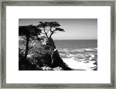 The Lone Cypress Tree Two B And W Framed Print by Joyce Dickens