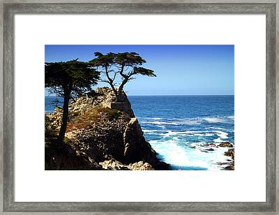 The Lone Cypress Tree Two Framed Print by Joyce Dickens