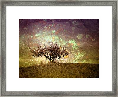 The Lone Tree Framed Print by Tara Turner