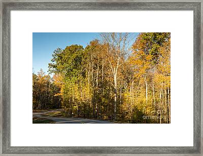 The Long And Winding Road - Natchez Trace Framed Print by Debra Martz