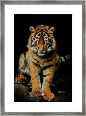 The Look Framed Print by Animus Photography