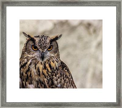 The Look Of An Owl Framed Print by Martin Newman