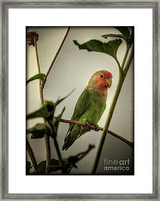 The Lovebird  Framed Print by Saija  Lehtonen
