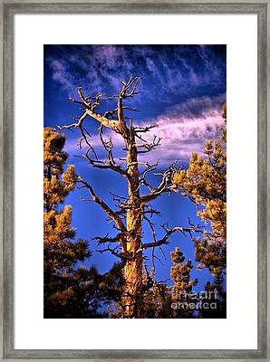 The Lurker Framed Print by Charles Dobbs