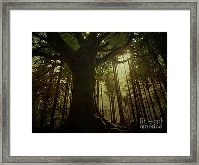 The Magical Beech Framed Print by Dominique Guillaume