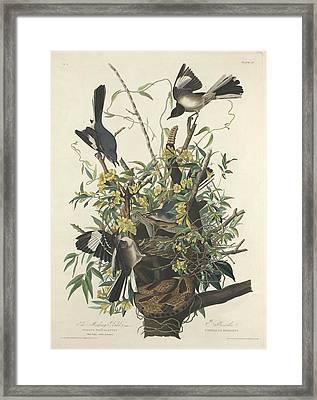 The Mockingbird Framed Print by John James Audubon