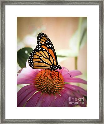 The Monarch Framed Print by Robert Bales