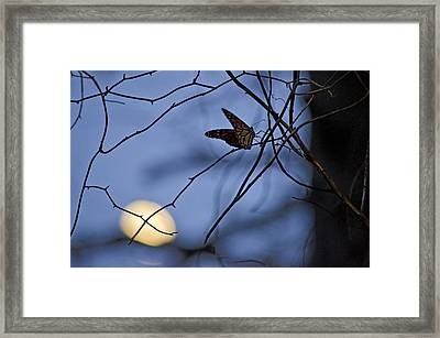 The Moon And The Monarch Framed Print by Jeff Rose