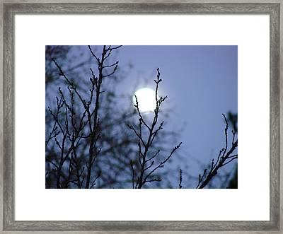 The Moon Framed Print by Liz Vernand
