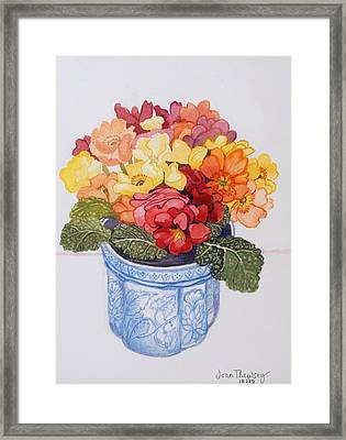 The Multicolored Primrose Framed Print by Joan Thewsey