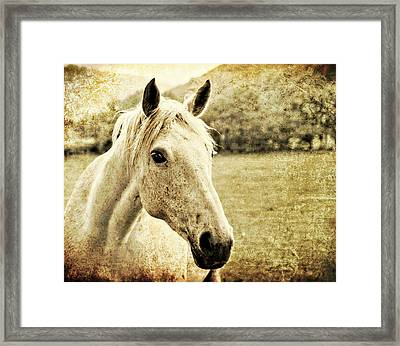 The Old Grey Mare Framed Print by Meirion Matthias