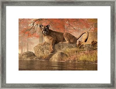 The Old Mountain Lion Framed Print by Daniel Eskridge