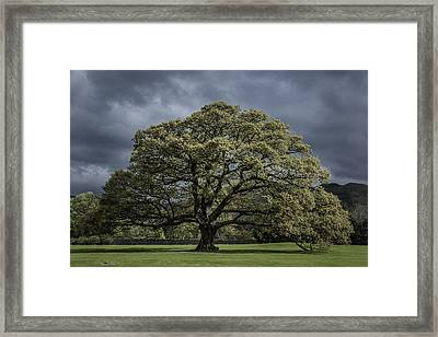 The Old Oak Of Glenridding V2.0 Framed Print by Chris Fletcher