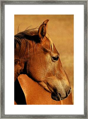 The Orange Horse Framed Print by Robert Anschutz