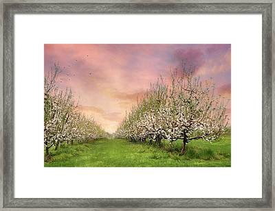 The Orchard Framed Print by Lori Deiter