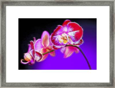 The Orchid Watches II Framed Print by Jon Glaser