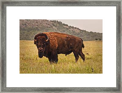 The  Outcast Framed Print by Tamyra Ayles