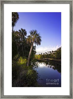 The Palm Stream Framed Print by Marvin Spates