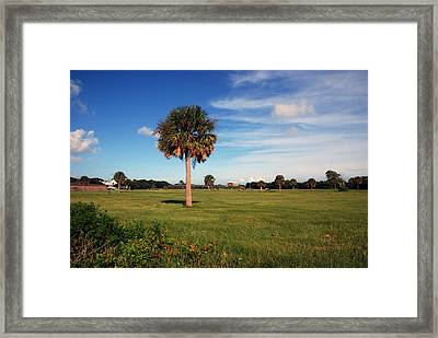 The Palmetto Tree Framed Print by Susanne Van Hulst