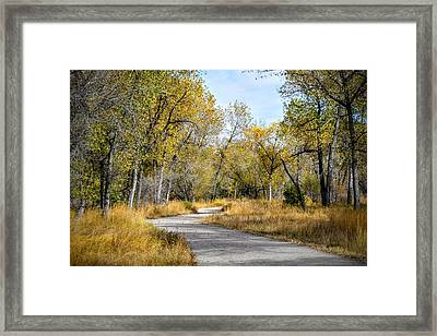 The Path Framed Print by Michael  Brungardt