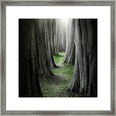 The Pathway Framed Print by Ian David Soar