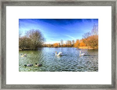 The Peaceful Swan Lake Framed Print by David Pyatt