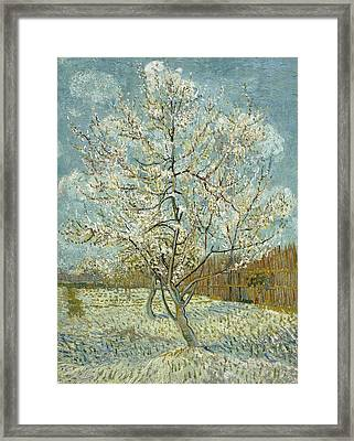 The Pink Peach Tree Framed Print by Vincent van Gogh