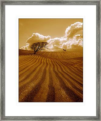 The Ploughed Field Framed Print by Mal Bray