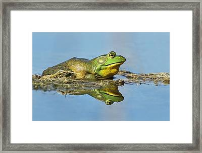 The Pond King Framed Print by Mircea Costina Photography
