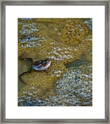The Proud Parent Framed Print by Justin Albrecht