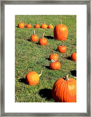 The Pumpkin Patch II Framed Print by Suzanne Gaff