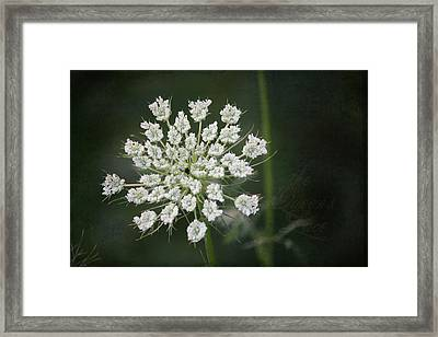 The Queens Lace Framed Print by Teresa Mucha
