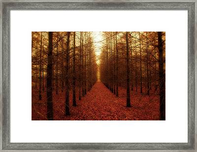 The Red Forest Framed Print by Amy Tyler