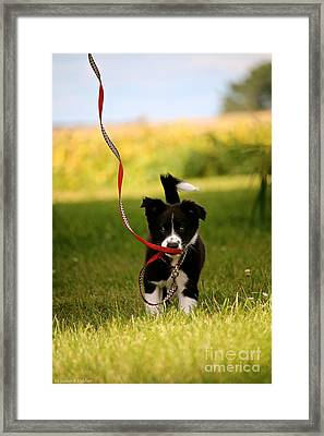 The Red Leash Framed Print by Susan Herber