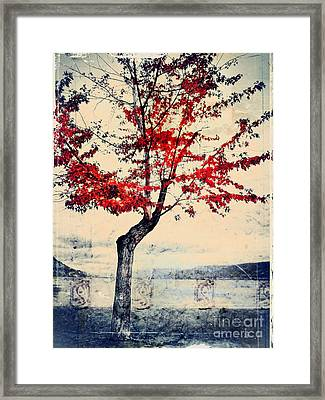 The Red Tree At Okanagan Lake Framed Print by Tara Turner