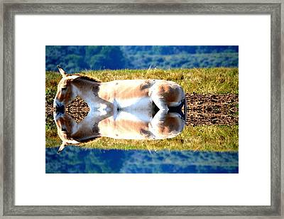 The Reflection Framed Print by Anand Swaroop Manchiraju