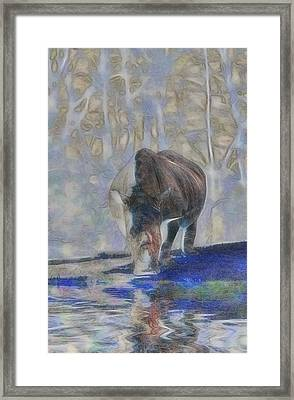 The Rhinoceros Framed Print by Scott Carruthers