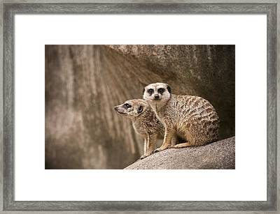 The Rock Of Meerkats Framed Print by Chad Davis