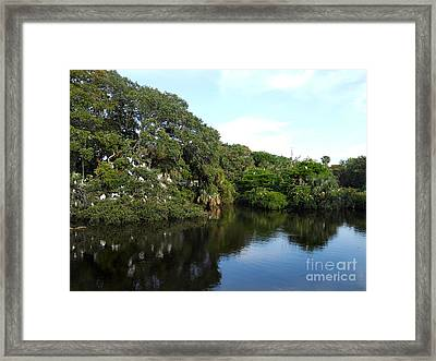 The Rookery Framed Print by Skip Willits