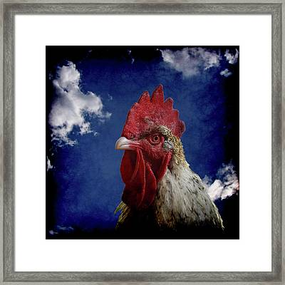 The Rooster Framed Print by Ernie Echols