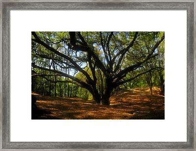 The Sacred Oak Framed Print by David Lee Thompson