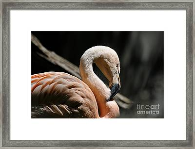 The Sacred Old Flamingoes Framed Print by Lois Bryan