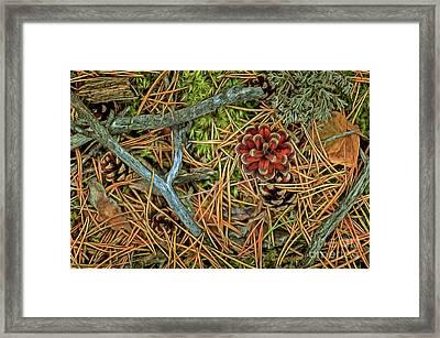 The Scent Of Pine Forest II Framed Print by Veikko Suikkanen